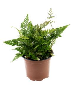 Planten en mossen