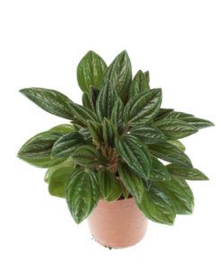 Diverse planten